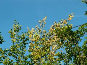 medium_arbre1.2.jpg