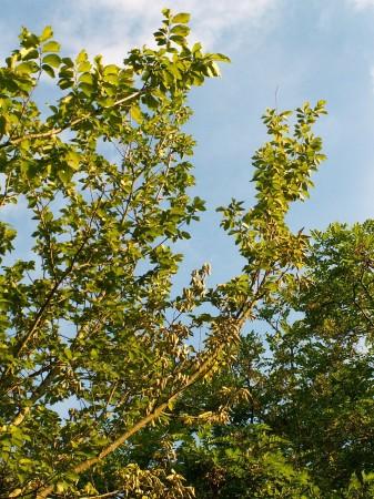 medium_arbre3.2.jpg