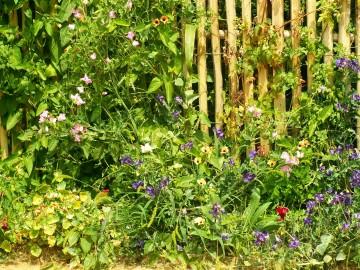 medium_jardin5d.jpg