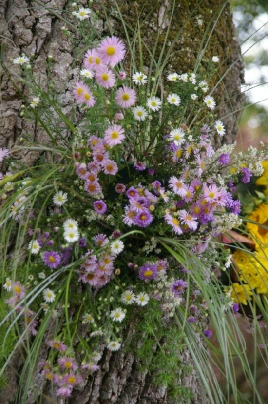 Floralies 073.JPG
