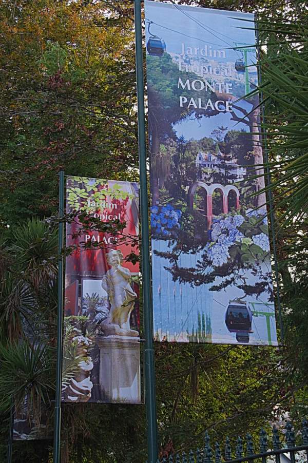 jardin, madere, funchal,jardin tropical
