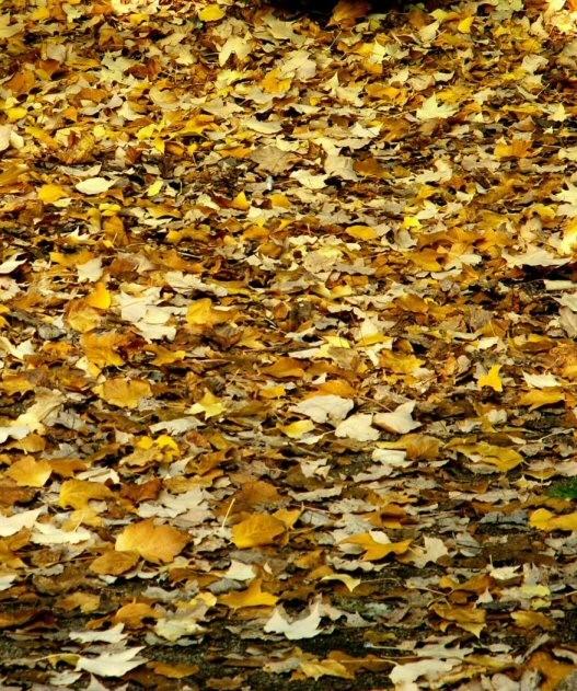 automne6.jpg